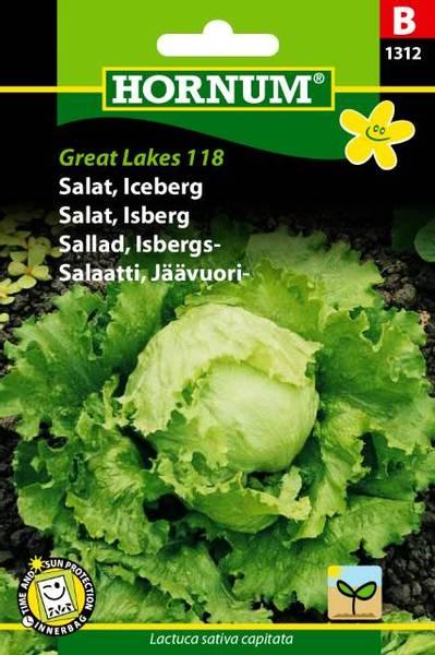 Bilde av Salat, Isberg Great Lakes 118(Lat: Lactuca sativa