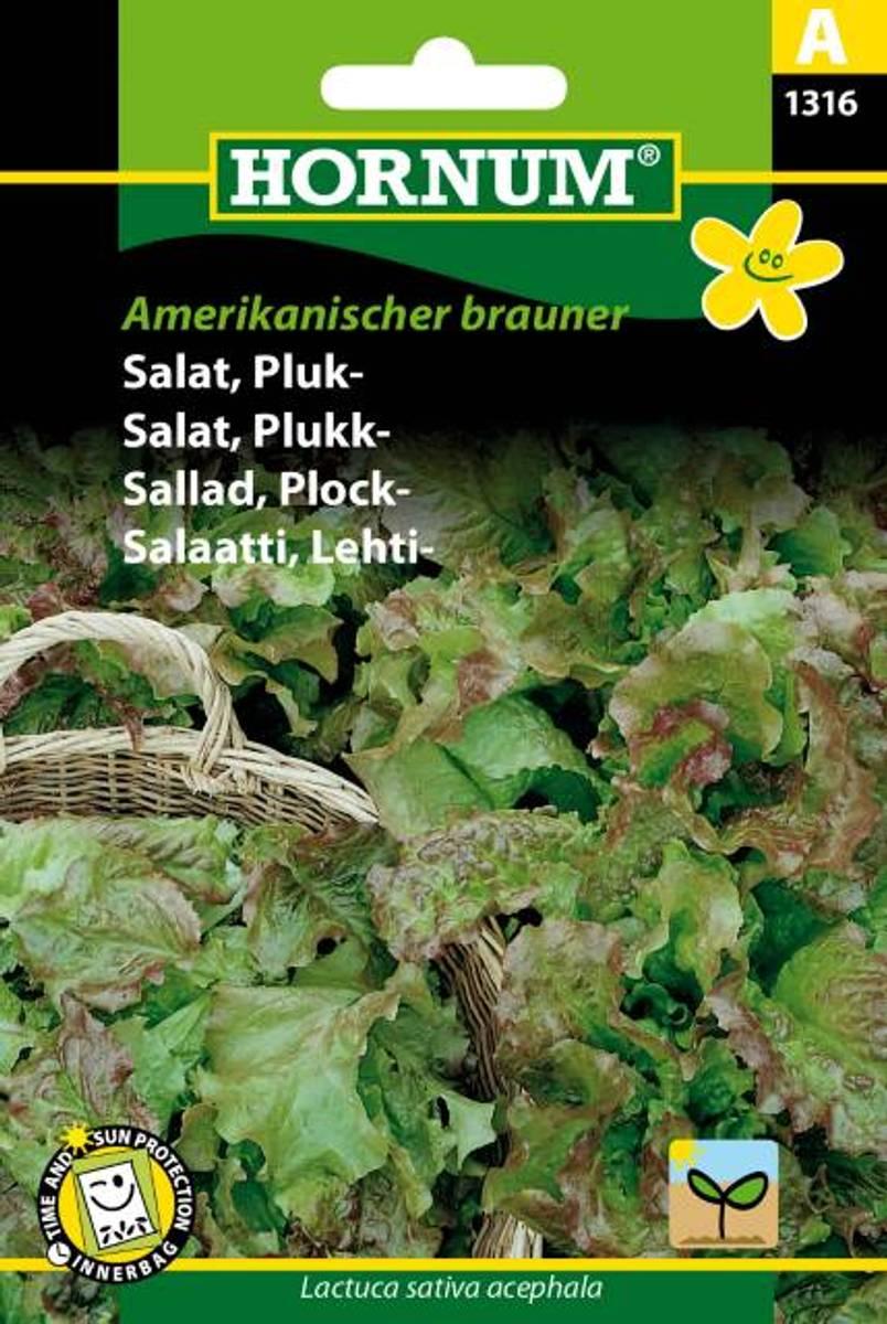 Salat, Plukk-Amerikanischer brauner(Lat: Lactuca sativa acephala