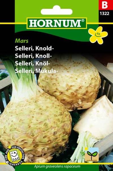 Bilde av Selleri, Knoll-Mars(Lat: Apium graveolens
