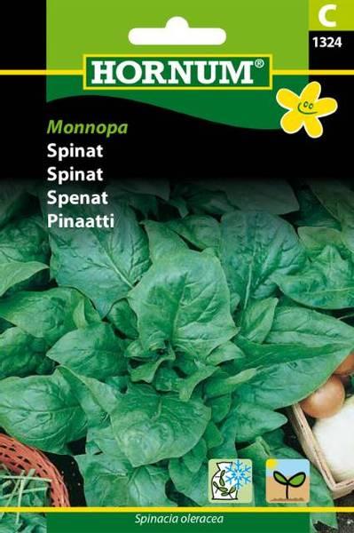 Bilde av Spinat Monnopa(Lat: Spinacia oleracea)