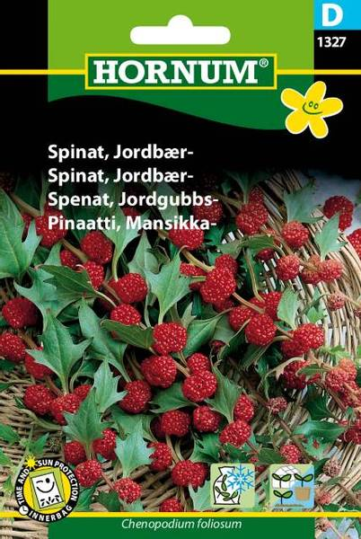 Bilde av Spinat, Jordbær-(Lat: Chenopodium foliosum)