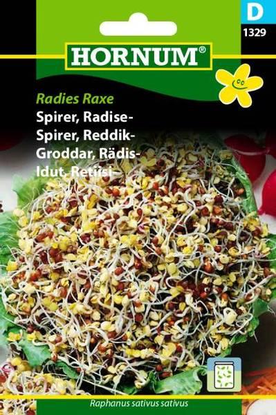 Bilde av Spirer, Reddik-Radies Raxe(Lat: Raphanus sativus