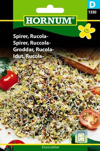 Bilde av Spirer, Ruccola-(Lat: Eruca sativa)