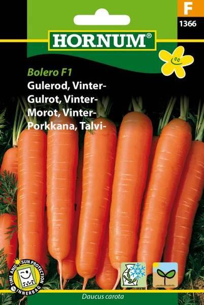 Bilde av Gulrot, Vinter-Bolero  (Lat: Daucus carota)