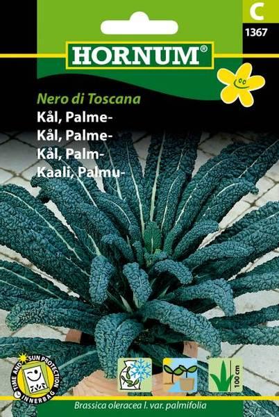 Bilde av Kål, Palme-Nero di Toscana(Lat: Brassica oleracea