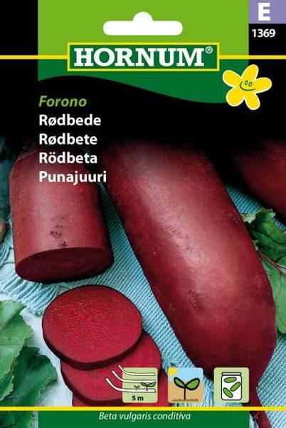 Bilde av Rødbete Forono(Lat: Beta vulgaris conditiva)
