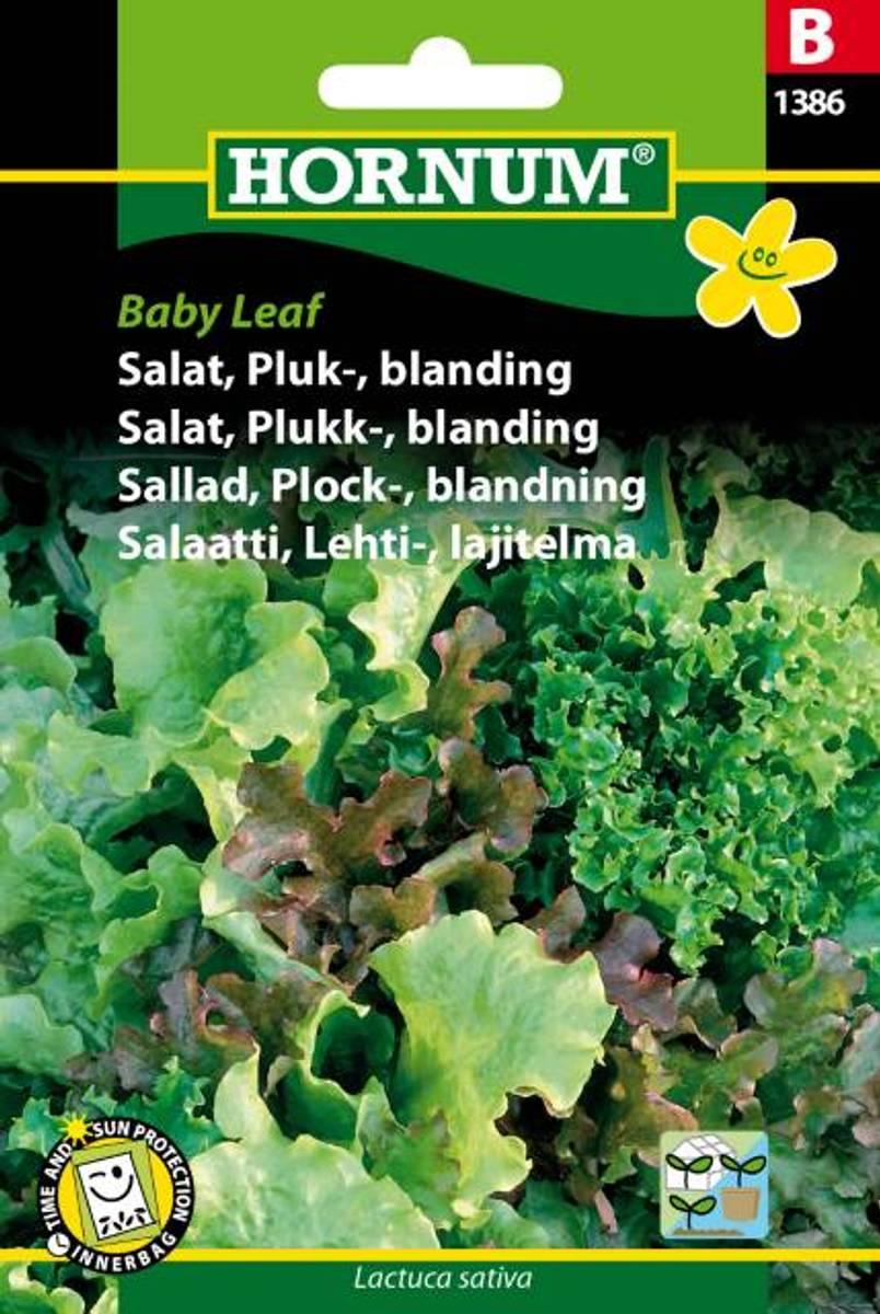 Salat, Plukk-, blanding, Baby Leaf(Lat: Lactuca sativa)