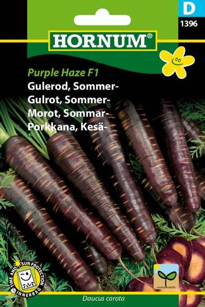 Bilde av Gulrot, Sommer-Purple Haze  (Lat: Daucus carota)
