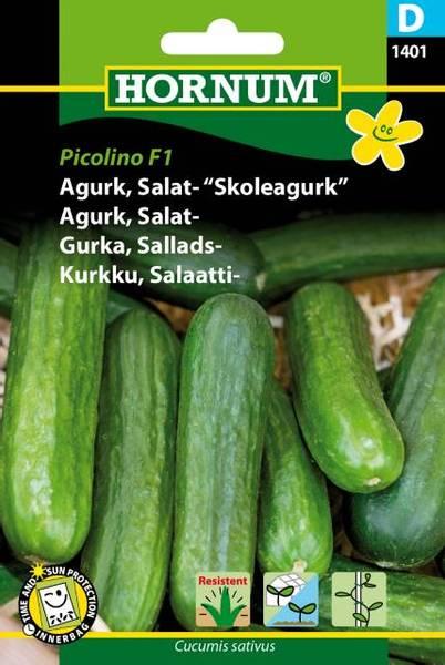Bilde av Agurk, Salat-Picolino  (Lat: Cucumis sativus)