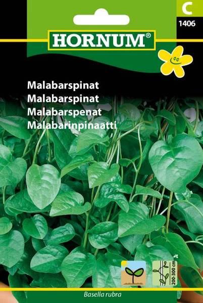 Bilde av Malabarspinat(Lat: Basella rubra)