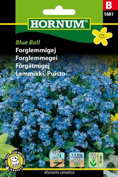 Bilde av Forglemmegei Blue Ball(Lat: Myosotis sylvatica)