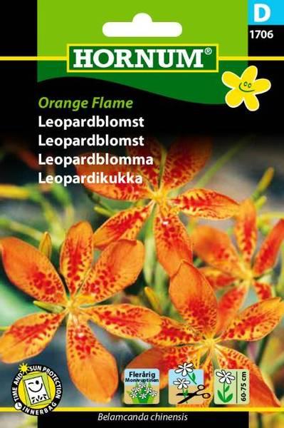 Bilde av Leopardblomst Orange Flame(Lat: Belamcanda