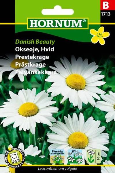 Bilde av Prestekrage Danish Beauty(Lat: Leucanthemum