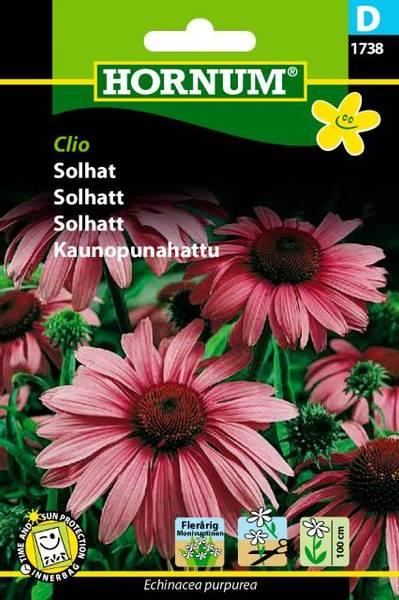 Bilde av Solhatt Clio(Lat: Echinacea purpurea)