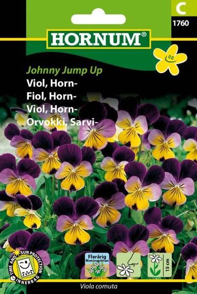 Bilde av Fiol, Horn-Johnny Jump Up(Lat: Viola cornuta)