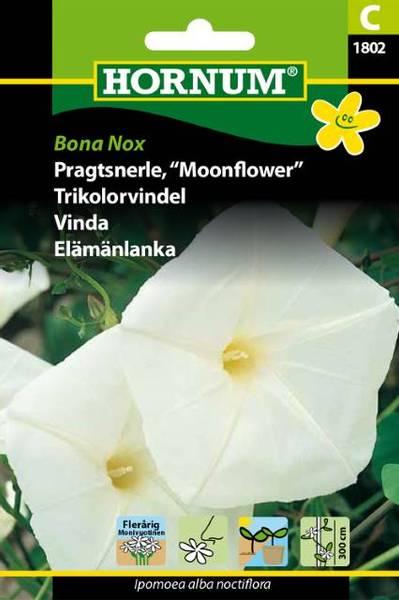 Bilde av Trikolorvindel Bona Nox(Lat: Ipomoea alba