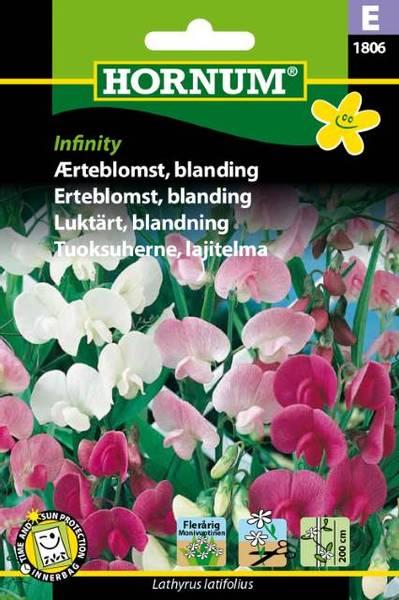 Bilde av Erteblomst, blanding, Infinity(Lat: Lathyrus