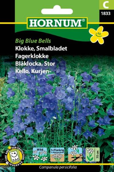 Bilde av Fagerklokke Big Blue Bells(Lat: Campanula