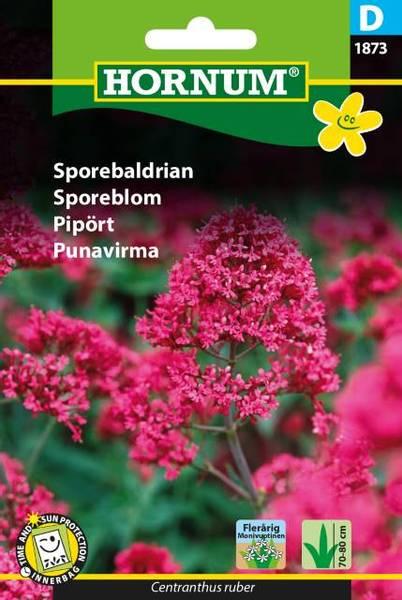 Bilde av Sporeblom(Lat: Centranthus ruber)
