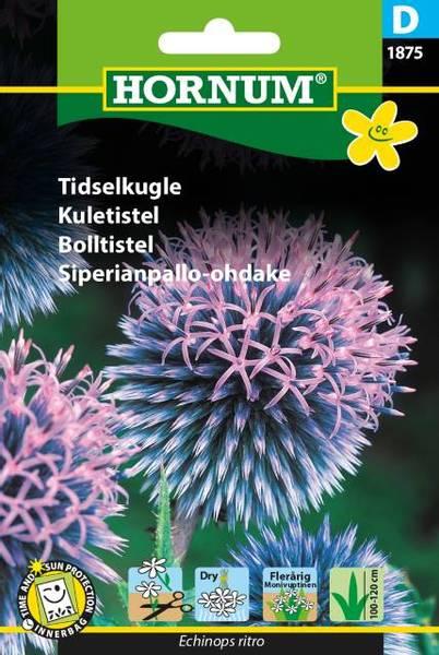 Bilde av Kuletistel(Lat: Echinops ritro)