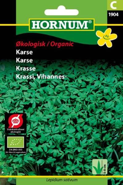 Bilde av Karse(Lat: Lepidium sativum)