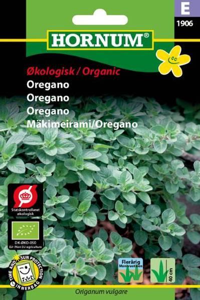 Bilde av Oregano(Lat: Origanum vulgare)