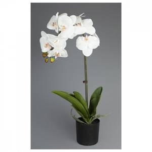 Bilde av Orkide- 65cm