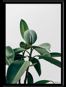 Bilde av Green plant