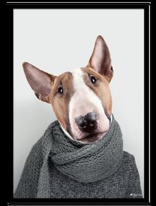 Bilde av Bill The Bull Terrier