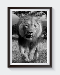 Bilde av PRINT - Løve gående