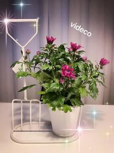 Bilde av Blomsterpotte i stativ