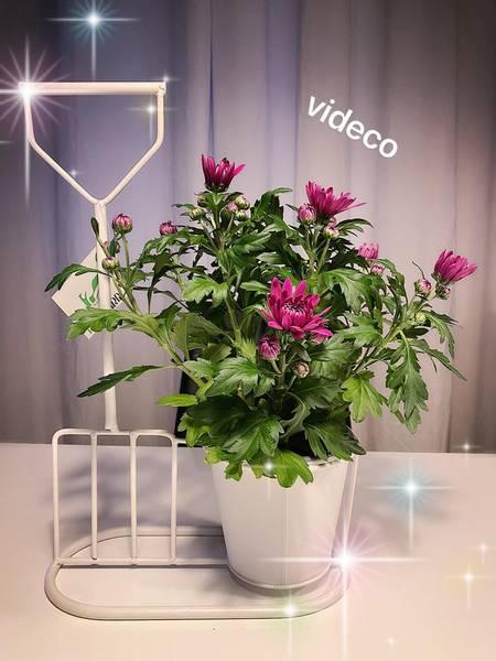 Blomsterpotte i stativ