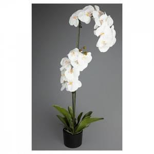 Bilde av Orkide- 100cm