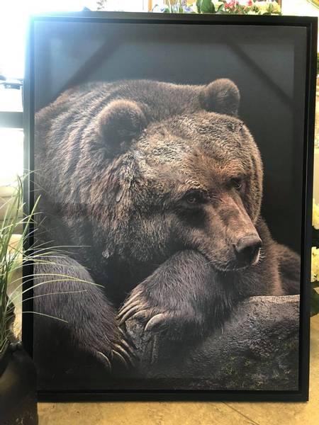 Lerret Bilde, sovende bjørn