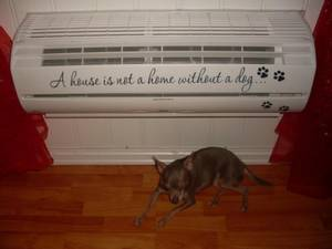 Bilde av A house is not a home dog