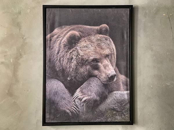 Bilde sovende bjørn 60x80 cm