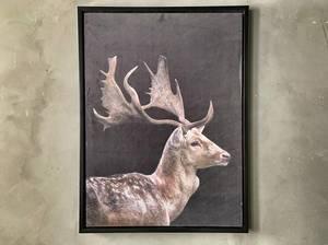 Bilde av Bilde kronhjort 60x80 cm.