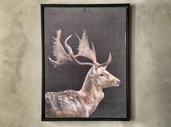 Bilde kronhjort 60x80 cm.