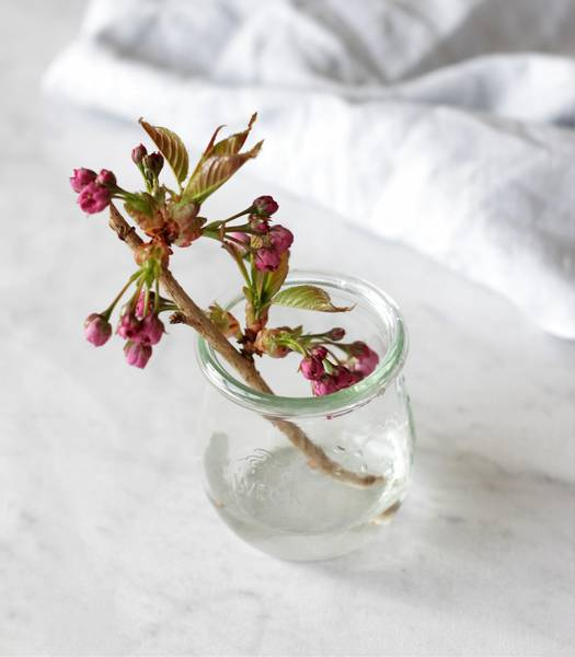 WECK® Tulipan, 220 ml, 12-pakning